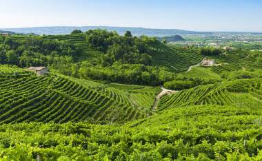Prosecco-vineyards-at-summer-Valdobbiadene-Italy
