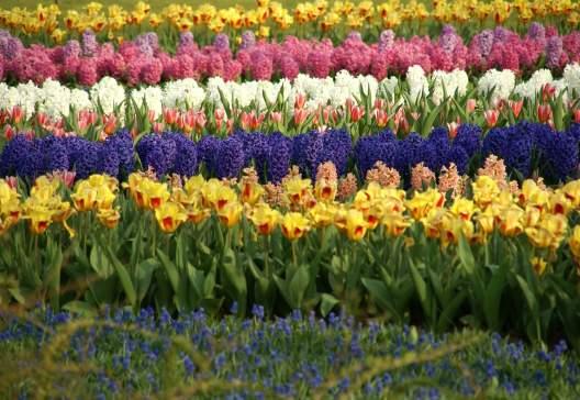 Flower-fields-1375640