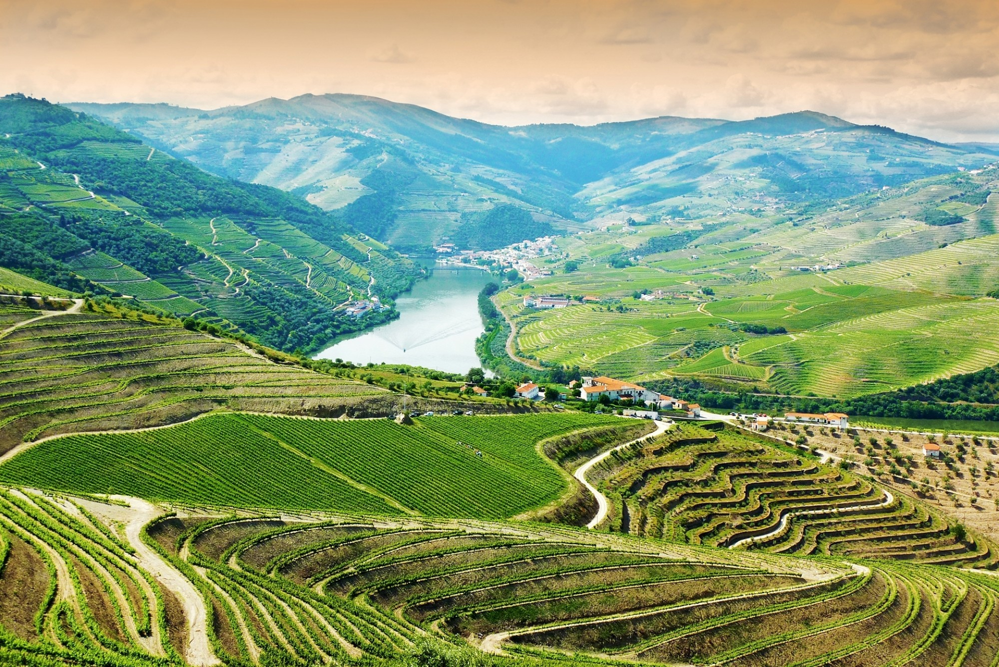 Vineyards-in-Douro-Valley-Portugal