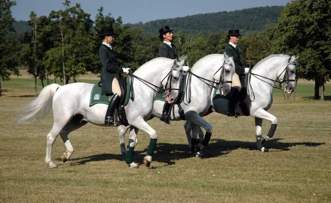 Horses07_Foto_Dalibor_Gregor