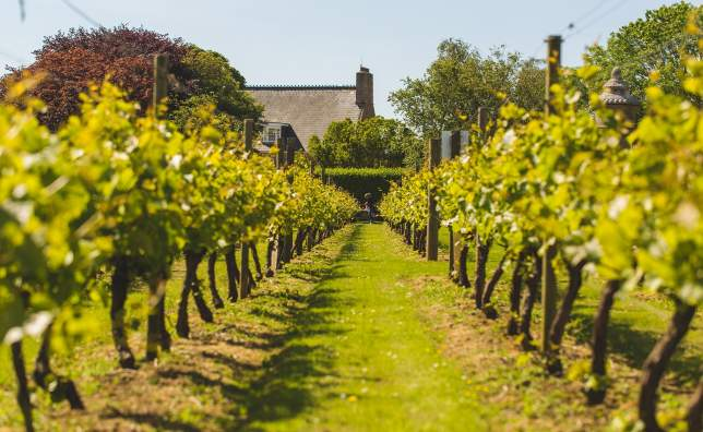 La-Mare-Wine-Estate-St-Mary- -Matt-Porteous