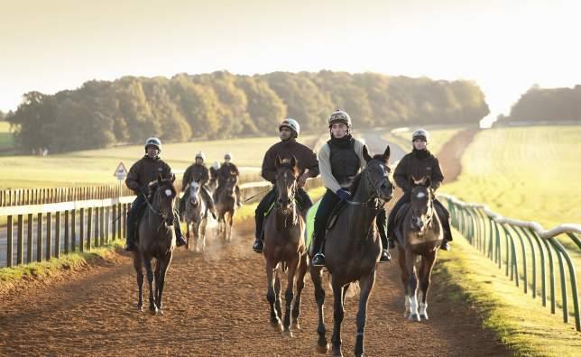 VB32452984-Jockeys-training-in-the-gallops-area-Newmarket- -Visit Britain-Rod-Edward
