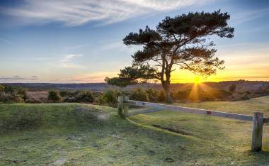 New-Forest-National-Park-in-Hampshire