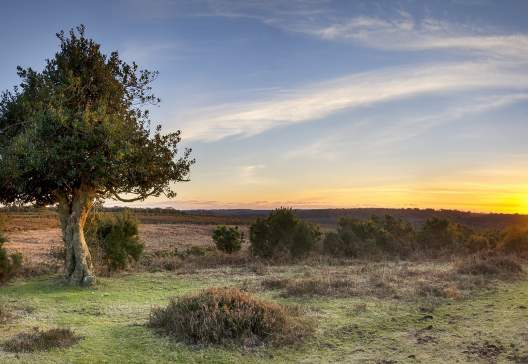 A-Star-burst-of-sunlight-at-Bratley-View-in-the-New-Forest-National-Park-in-Hampshire