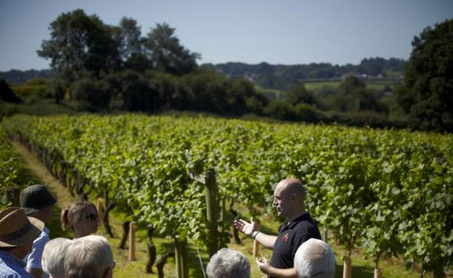 Chapel Down_Guided-Tour-Vineyard-View-Smaller- -Chapel-Down-Group-Plc