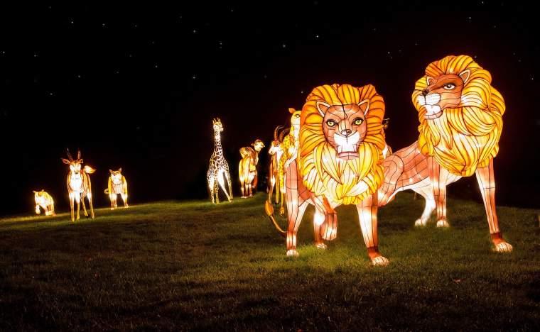Longleat-FOL-Safari-Animals
