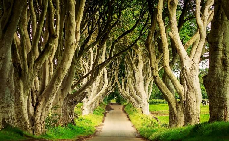 Dark-Hedges-in-Armoy-Northern-Ireland-at-day-sunlight.-Image-with-selective-focus-game-of-thrones