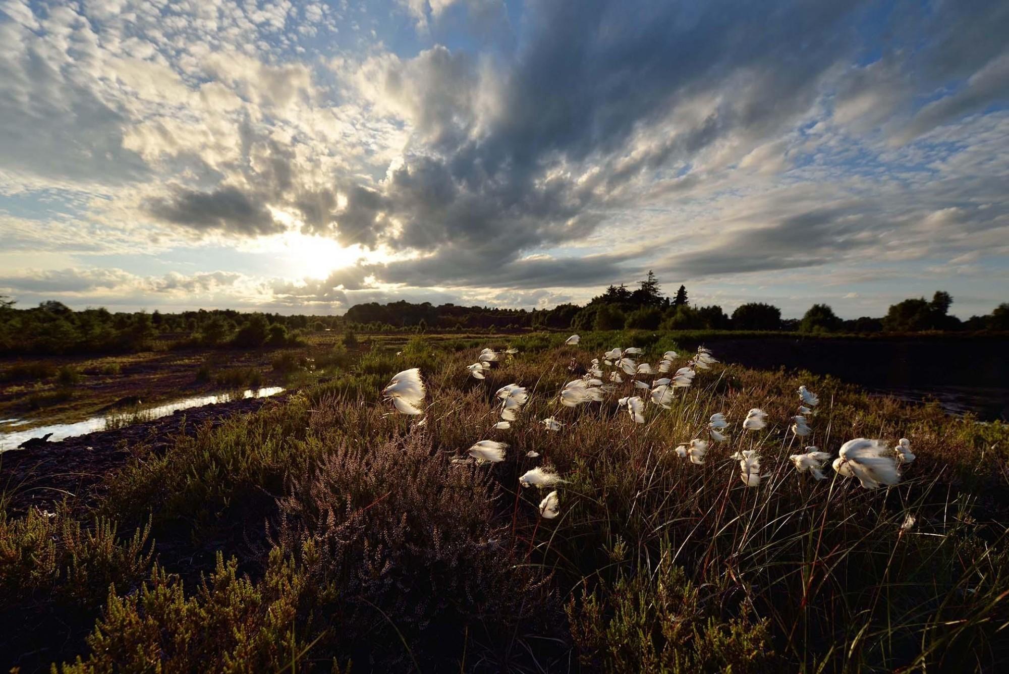 Lullymore Heritage Park Michael Anderton