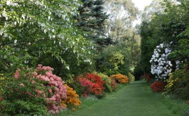 Mount Usher Azalea Walk for Tree Trail