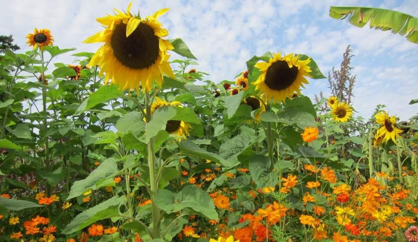 Wisley-Gardens-2- Jane-Martin